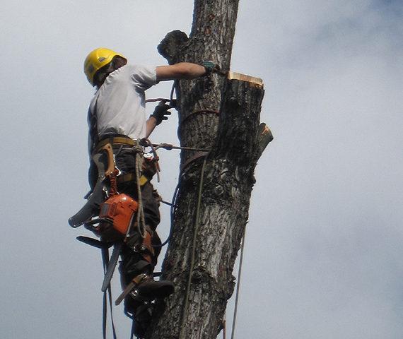 vyskove-prace-ostatni-rizikove-kaceni-stromu-nahled